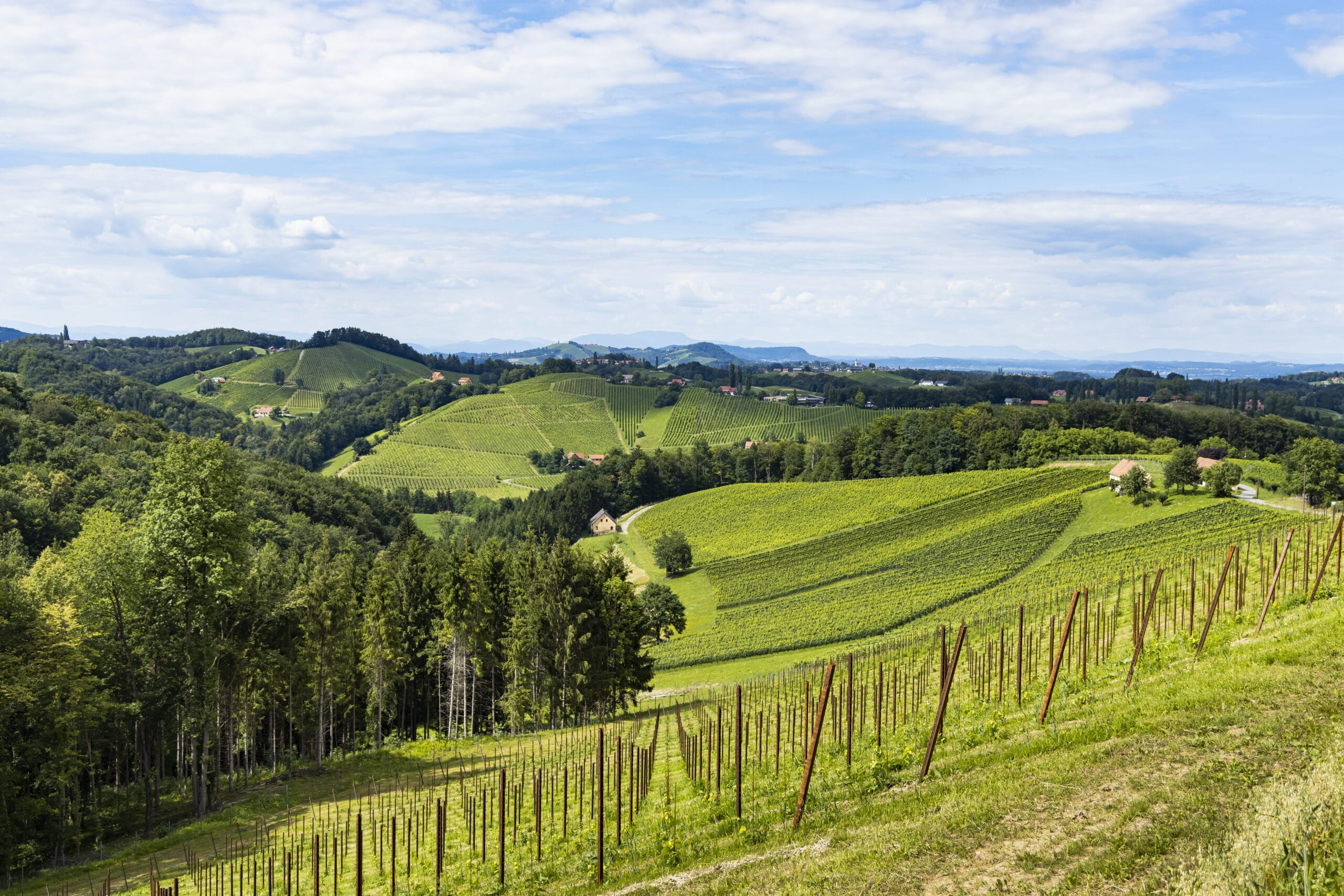 Südsteirische Jaus'n & Weinvielfalt mit herrlichem Ausblick.